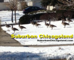 Suburban Chicagoland grows to more than 1 million views per month