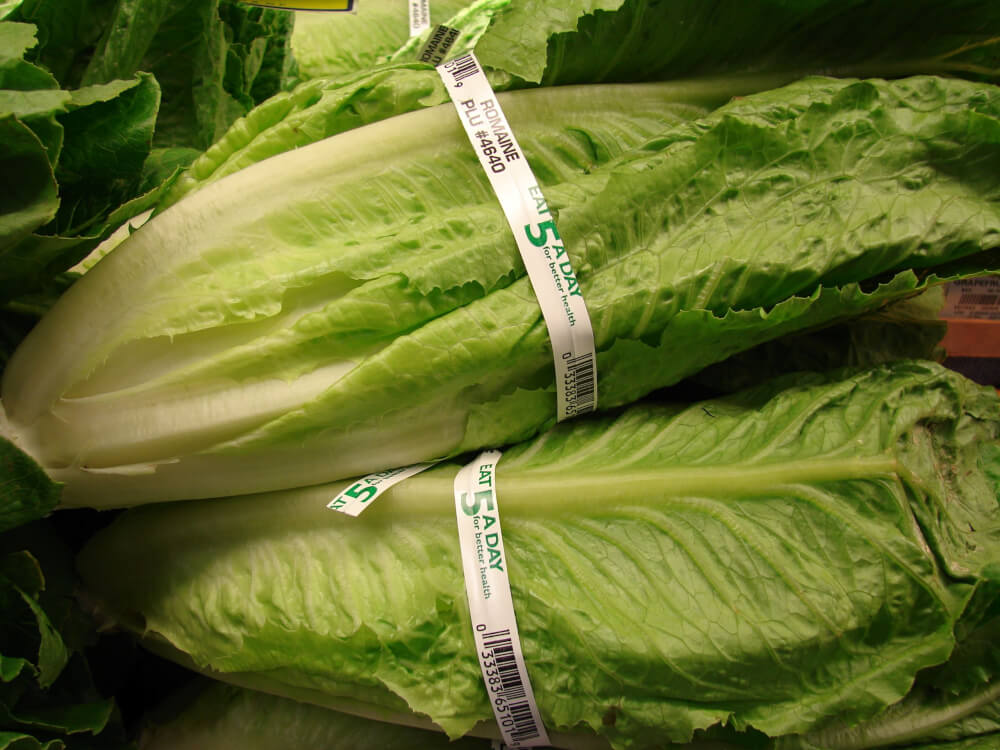 E. Coli Outbreak Possibly Linked to Romaine Lettuce