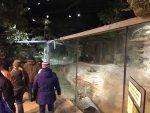 Brookfield Zoo exhibit. Photo courtesy of Ray Hanania