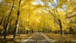 Cook County Forest Preserve to host public events Sept. 26 at forest locations