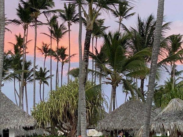 Palm trees at the Grand Reserve Paradisus Palma Real. Photo courtesy of Ray Hanania