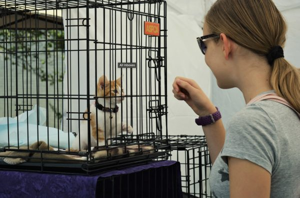 Orland Township's 9th annual pet fair and fundraiser, Pet-Palooza, attracted nearly 1,500 guests on September 25. With live entertainment, such as musician Erik Donner and professional reptile educators Crosstown Exotics, free food samples, the ever-so popular Kids Zone, and 39 different vendors present, there was something for everyone to enjoy.